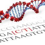 FTO SNP Genotyping