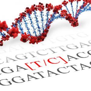CLOCK SNP Genotyping