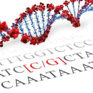 MR, NR3C2 SNP Genotyping