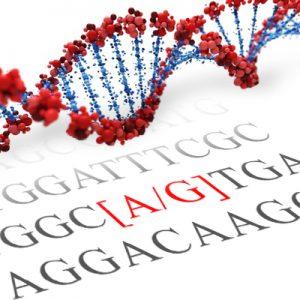 COMT SNP Genotyping