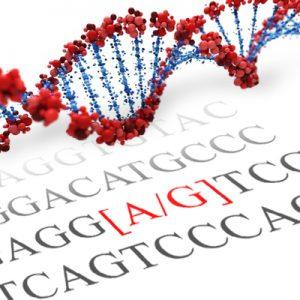 OXTR SNP Genotyping
