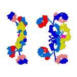Secretory Immunoglobulin A in Saliva