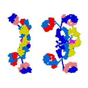 Salivary Secretory Immunoglobulin A