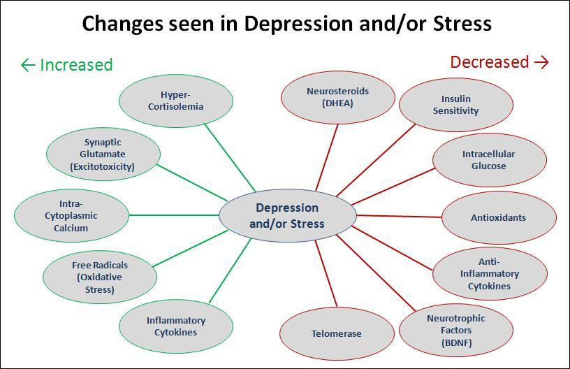 Body's Response to Stress
